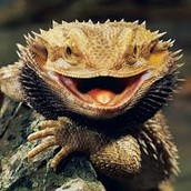 i sell lizards and roaches and lizards and lizards