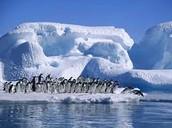 Antartica glaciers