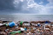 Beach Wasteland
