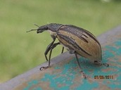 A beetle on a rail.