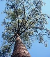 Árvores de interesse público