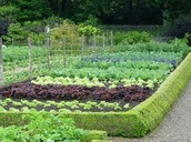 Growing your own food would be a non-economic risk, because the crop could fail.