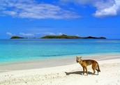 9. Fraser Island