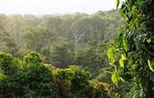 Nicaraguan Selvia