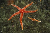 What Are Starfish?