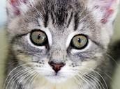 Een zindelijke kat