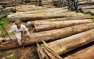 A lady with Teak logs