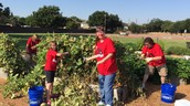 FUMC spent part of their Saturday in our garden.