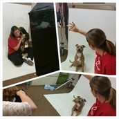 Photoshoot at the Sac County Animal Shelter
