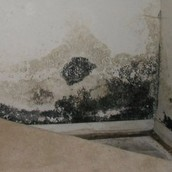 Acremonium Mold caused by high levels of humidity in a building