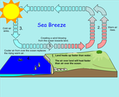 How do sea breezes blow?