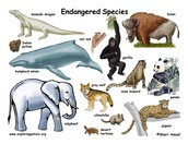 What are endangered species?