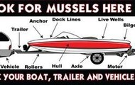Look for mussels here.