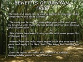 The Importance of The Banyan Tree