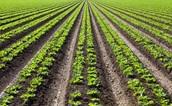 Biomass crops-plants