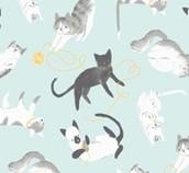 Here Kitty Kitty - Organic!