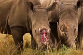 Illegal wildlife Trade facts