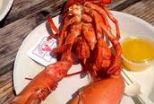 Un Homard-Lobster