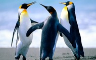 SAVE THE PENGUINS FROM AFRICA