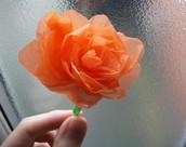 14 -  Plastic Flowers