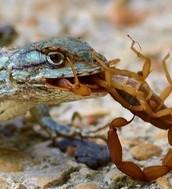 Scorpions Life