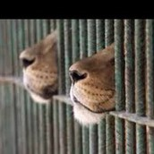 What is captivity?