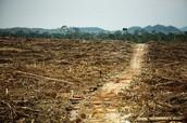 The destruction palm oil causes