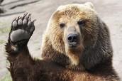 The safe bear
