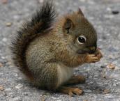 Squirrels-Repeat a Word