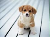 I love animals! Especially puppies.