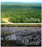 Before and after Deforestation