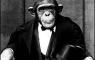 An Ape in a Suit