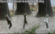 I think they do this to train themselfs for the real world