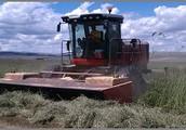 Harvesting Timothy