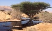 יום שחור למדינת ישראל- כמויות נפט דלפו בערבה