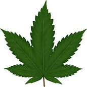 Legalize All Marijuana