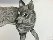 Shiba Inu Pen & Ink