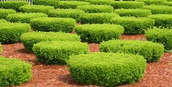 Why shrubs are so important