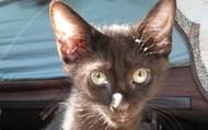 Adopt Pogo!
