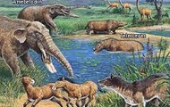 A few mammals