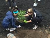 Key Club Members Plant Rain Garden