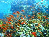 You will get to see very beautiful coral reefs
