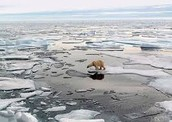 Why do melting ice caps matter?