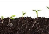 here at NCSU we look at why soil is important