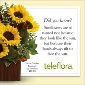 Interesting Facts About Flowers