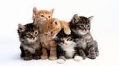 Kristen: Cat Whisperer