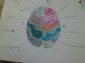 Whole Brain Thinker