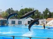Jardim Zoo Dolphins