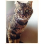 My cat.