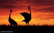 Sunset Dances
